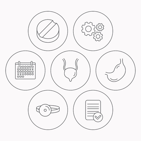 gastroenterology: Medical mirror, tablet and stomach organ icons. Urinary bladder linear sign. Check file, calendar and cogwheel icons. Vector