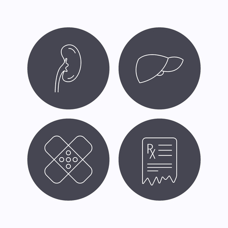 analyses: Liver, medical plaster and prescription icons. Kidney linear sign. Flat icons in circle buttons on white background. Vector
