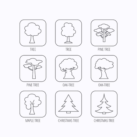 wilds: Pine tree, maple and oak icons. Christmas trees linear signs. Forest trees flat line icons. Flat linear icons in squares on white background. Vector Illustration