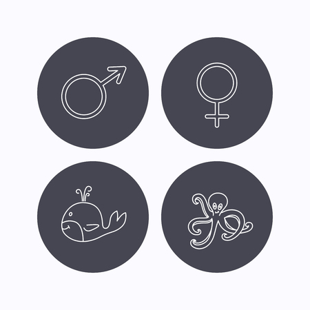fondo para bebe: Male, female and octopus icons. Whale linear sign. Flat icons in circle buttons on white background. Vector