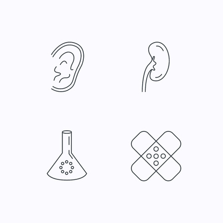 analyses: Lab bulb, medical plaster and ear icons. Kidney linear sign. Flat linear icons on white background. Vector Illustration