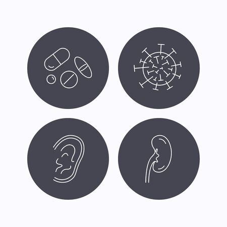 analyses: Medical pills, virus and ear icons. Kidney linear sign. Flat icons in circle buttons on white background. Vector