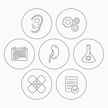 medical check: Lab bulb, medical plaster and ear icons. Kidney linear sign. Check file, calendar and cogwheel icons. Vector Illustration