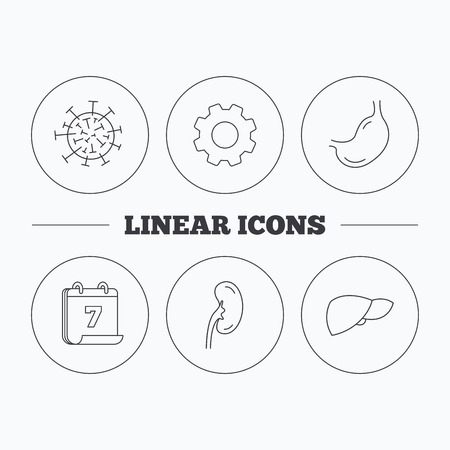 gastroenterology: Virus, stomach and kidney icons. Liver linear sign. Flat cogwheel and calendar symbols. Linear icons in circle buttons. Vector Illustration