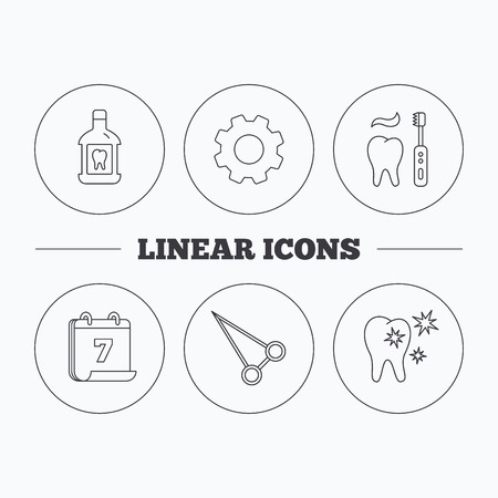 sensitive: Mouthwash, healthy teeth and peans forceps icons. Brushing teeth linear sign. Flat cogwheel and calendar symbols. Linear icons in circle buttons. Vector Illustration