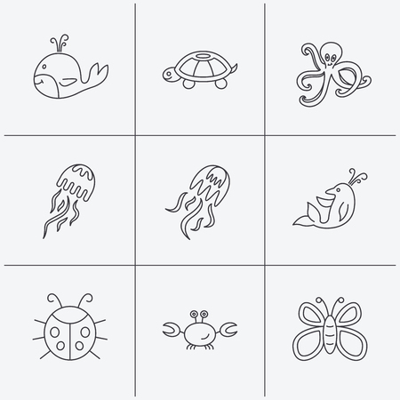 inhabitants: Octopus, turtle and dolphin icons. Jellyfish, whale and ladybug linear signs. Crab, butterfly flat line icons. Linear icons on white background. Vector