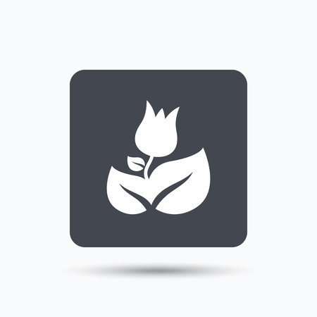 florist: Rose flower icon. Florist plant with leaf symbol. Gray square button with flat web icon. Vector