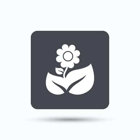 florist: Flower icon. Florist plant with leaf symbol. Gray square button with flat web icon. Vector