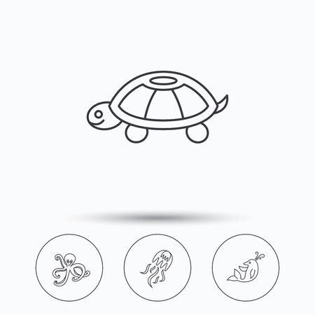 inhabitants: Octopus, turtle and dolphin icons. Jellyfish linear sign. Linear icons in circle buttons. Flat web symbols. Vector