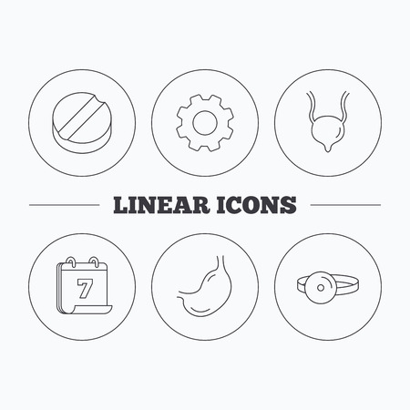 analyses: Medical mirror, tablet and stomach organ icons. Urinary bladder linear sign. Flat cogwheel and calendar symbols. Linear icons in circle buttons. Vector