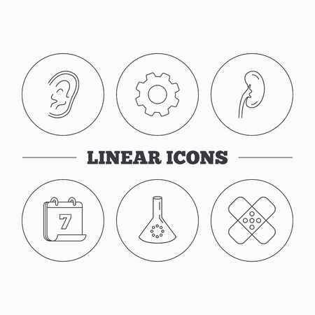 analyses: Lab bulb, medical plaster and ear icons. Kidney linear sign. Flat cogwheel and calendar symbols. Linear icons in circle buttons. Vector