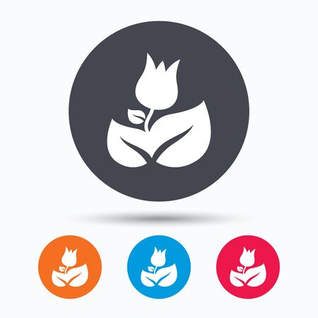 florist: Rose flower icon. Florist plant with leaf symbol. Colored circle buttons with flat web icon. Vector