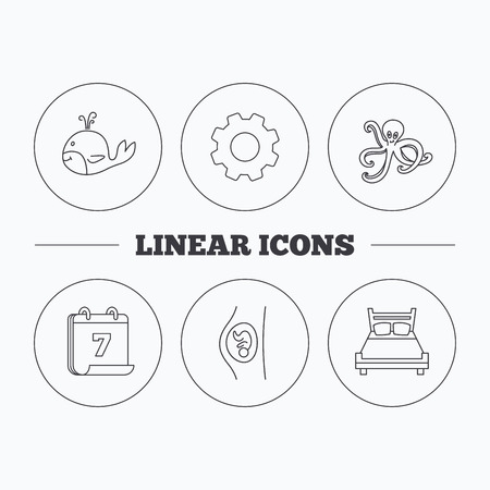gynaecology: Whale, octopus and double bed  icons. Pregnancy linear sign. Flat cogwheel and calendar symbols. Linear icons in circle buttons. Vector
