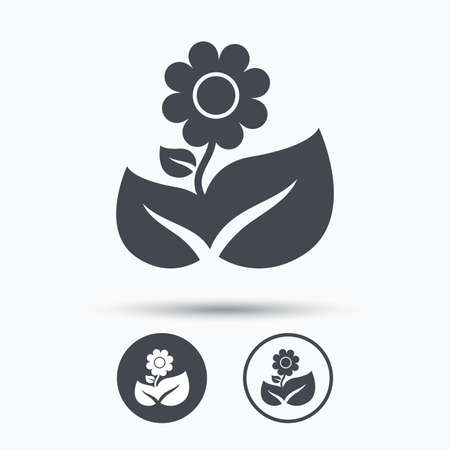 florist: Flower icon. Florist plant with leaf symbol. Circle buttons with flat web icon on white background. Vector