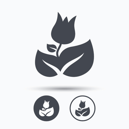 florist: Rose flower icon. Florist plant with leaf symbol. Circle buttons with flat web icon on white background. Vector