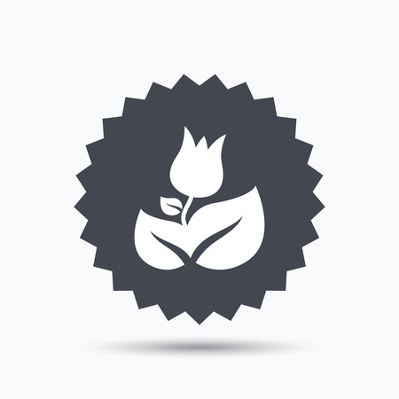 florist: Rose flower icon. Florist plant with leaf symbol. Gray star button with flat web icon. Vector Illustration