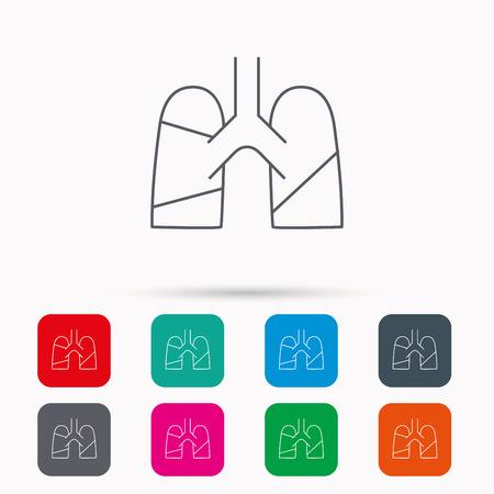 pulmology: Lungs icon. Transplantation organ sign. Pulmology symbol. Linear icons in squares on white background. Flat web symbols. Vector