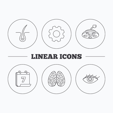 neurology: Eye, neurology brain and surgical lamp icons. Trichology linear sign. Flat cogwheel and calendar symbols. Linear icons in circle buttons. Vector