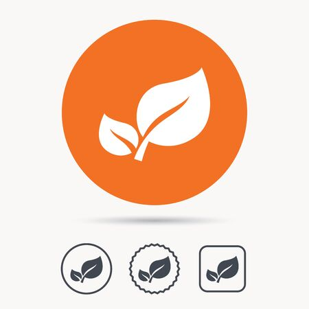 star product: Leaf icon. Fresh organic product symbol. Orange circle button with web icon. Star and square design. Vector