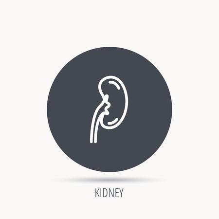 nephrology: Kidney icon. Transplantation organ sign. Nephrology symbol. Round web button with flat icon. Vector Illustration