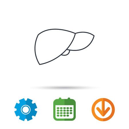 Liver icon. Transplantation organ sign. Medical hepathology symbol. Calendar, cogwheel and download arrow signs. Colored flat web icons. Vector Illustration