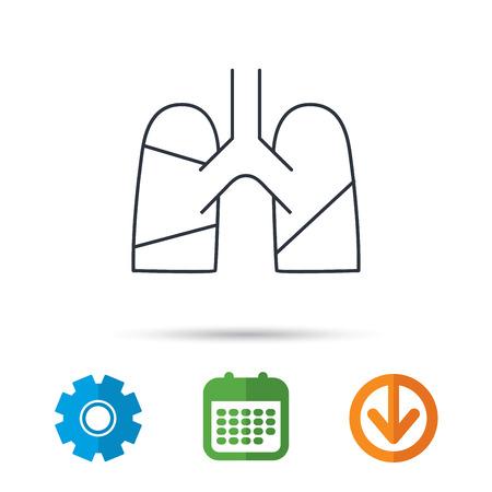 pulmology: Lungs icon. Transplantation organ sign. Pulmology symbol. Calendar, cogwheel and download arrow signs. Colored flat web icons. Vector