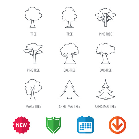 wilds: Pine tree, maple and oak icons. Christmas trees linear signs. Forest trees flat line icons. New tag, shield and calendar web icons. Download arrow. Vector