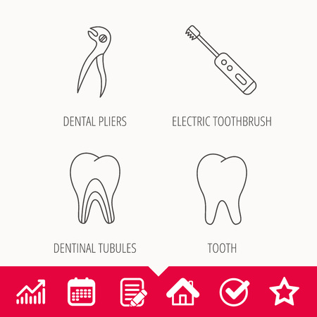 sensitive: Tooth, electric toothbrush and pliers icons. Dentinal tubules linear sign. Edit document, Calendar and Graph chart signs. Star, Check and House web icons. Vector