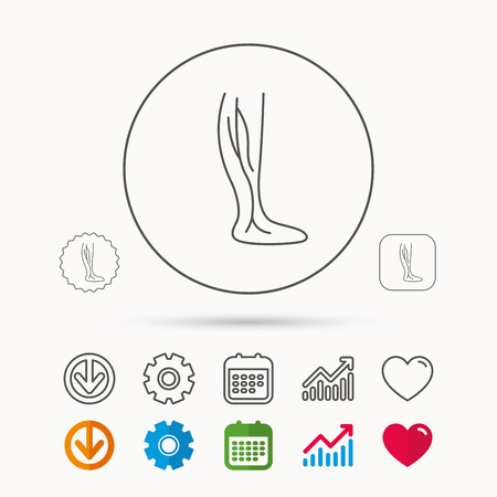 Phlebology icon. Leg veins sign. Varicose or thrombosis symbol. Calendar, Graph chart and Cogwheel signs. Download and Heart love linear web icons. Vector