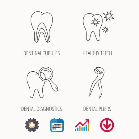 sensitive: Healthy teeth, dentinal tubules and pliers icons. Dental diagnostics linear sign. Calendar, Graph chart and Cogwheel signs. Download colored web icon. Vector