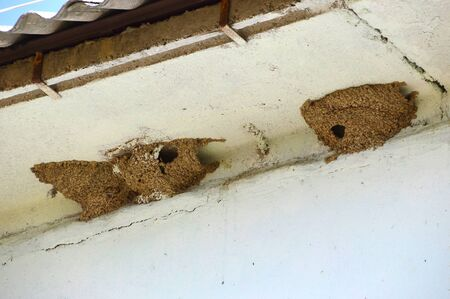 Nests of swallows under the roof of the house. spring, Russia Banco de Imagens