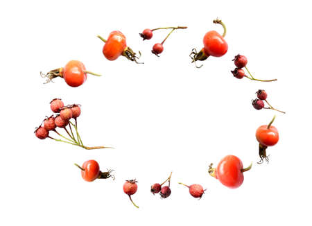 White background with isolated wild autumn Russian Far East berries of hawthorn, rose hips. Copy space, oval frame. effect of thrown up berries