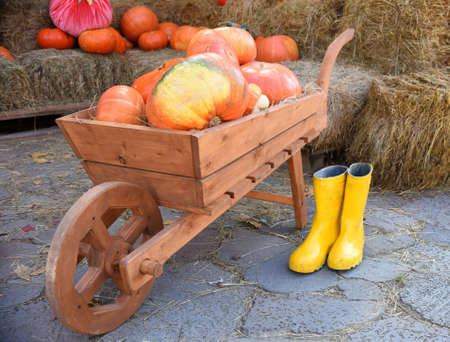Wooden wheelbarrow with harvest of pumpkin on  background of mown grass. yellow rubber boots are nearby. Decoration for a garden, backyard Stock Photo