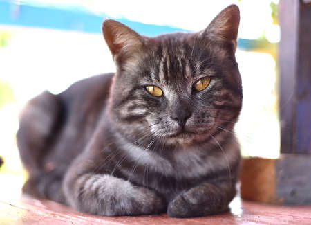 Adult male cat looking at the camera