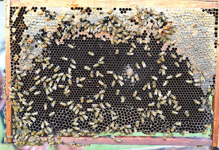 honeycomb with bees without people Zdjęcie Seryjne