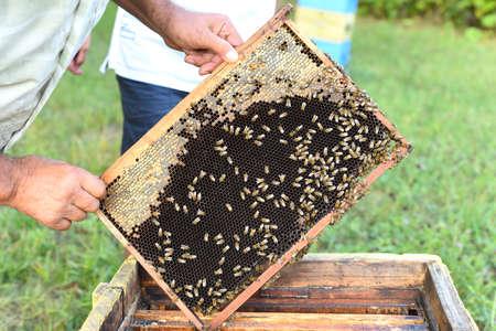 honeycomb with bees in hand Zdjęcie Seryjne