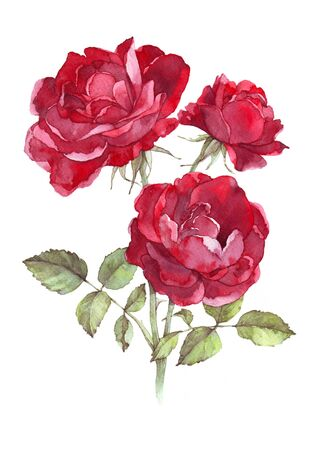 Hand drawn watercolor cute red wild rose.