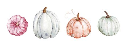 Beautiful pumpkins on isolated white background. Autumn set of elements on isolated white background. Watercolor illustration. Hand drawing. It is perfect for thanksgiving cards or posters, halloween Banco de Imagens