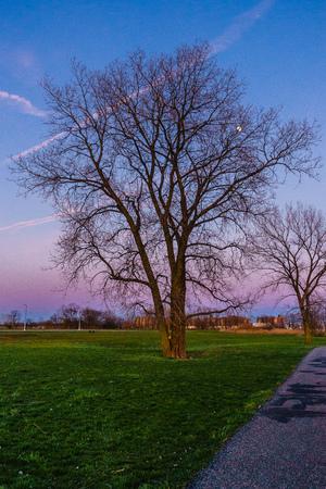 vaux: tree in Calvert Vaux Park