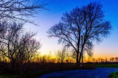 vaux: Sunset through a tree in Calvert Vaux Park
