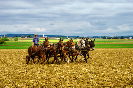 Amish land paard boerderij schuur veld landbouw in Lancaster, PA