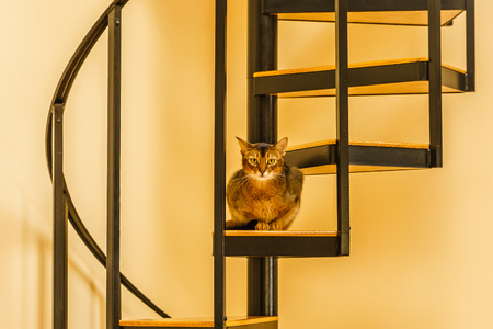 Beautiful Cat Sitting In The Kitchen On A Spiral Staircase Stock Photo    78753566