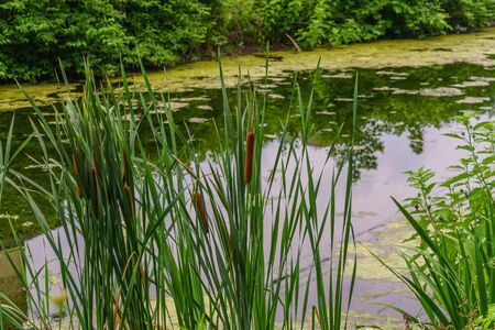Delaware Canal Towpath and bulrush, Historic New Hope, PA USA Stock Photo