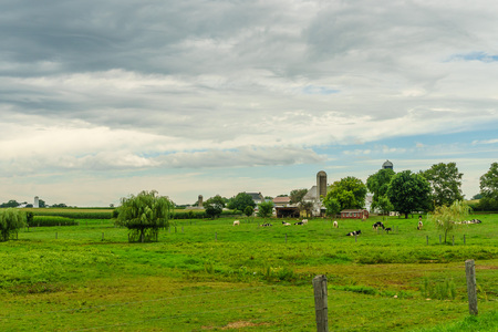Amish country farm barn field agriculture and grazing cows in Lancaster, PA 版權商用圖片