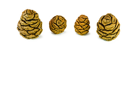 Four giant sequoia cones isolated on the white background. Фото со стока