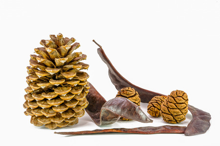 Cones of pine, sequoia and Seed Pod, California, isolated on the white background