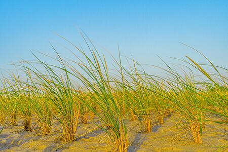 Beach, Sand Dunes and Grass on north side of the Provincelands Cape Cod, Atlantic ocean view MA US