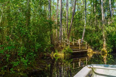 Okefenokee Swamp Park Archivio Fotografico