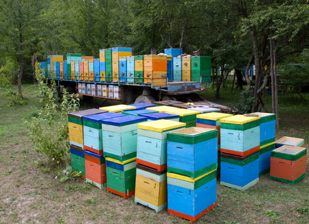 apiary: Mobile apiary Beehives Stock Photo