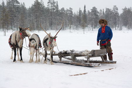 saami: Sami national costume near the reindeer Editorial